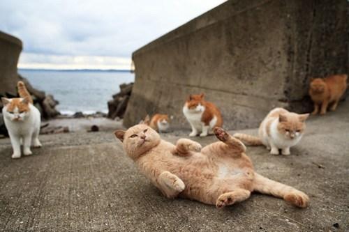 fubirai isola dei gatti