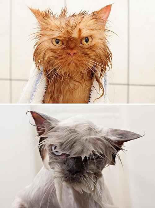 gatti bagnati