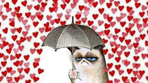 gatto san valentino