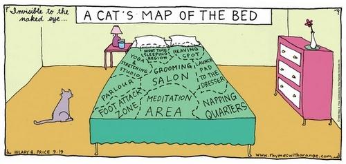 mappa del letto felina