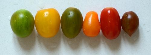 pomodori datterini mix colorato