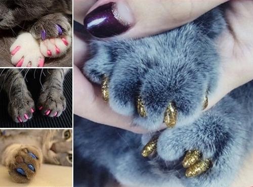 copri unghie colorati gatti