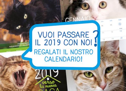 calendario 2019 mondo gatto