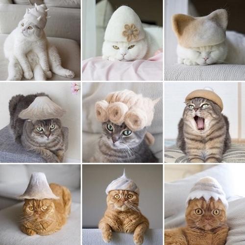 cappelli pelo gatti ryo yamazaki
