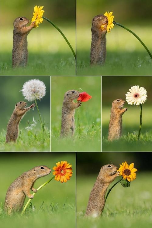 scoiattolo fiori dick van duijn