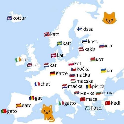 gatto europa